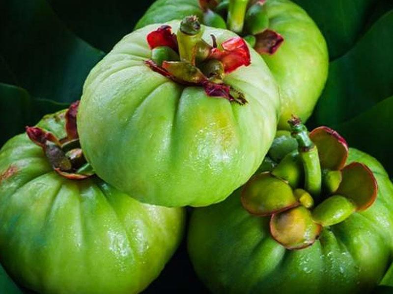 Garcinia-Cambogia- bionut elixir