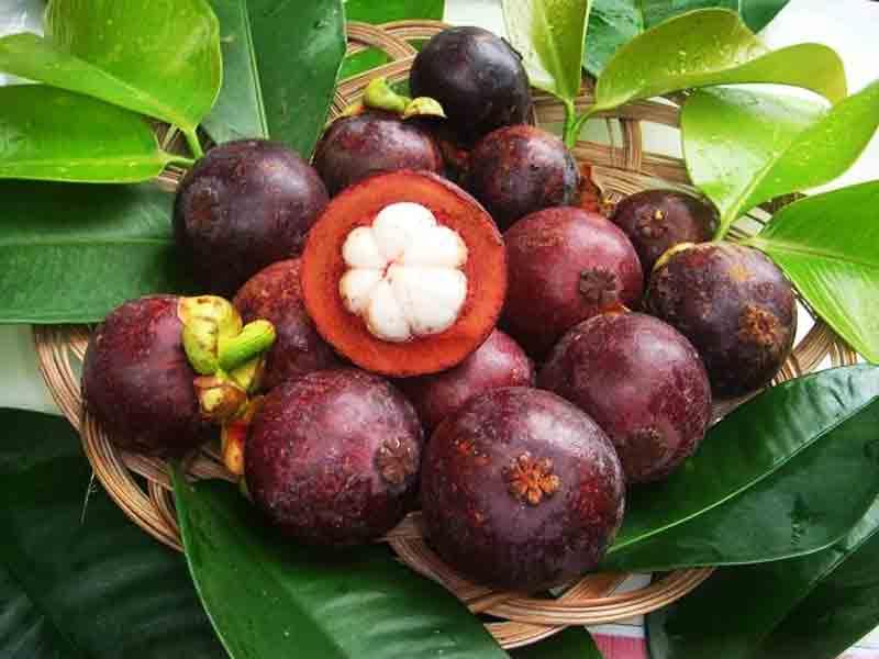 Garcinia-Mangostana fruit extract
