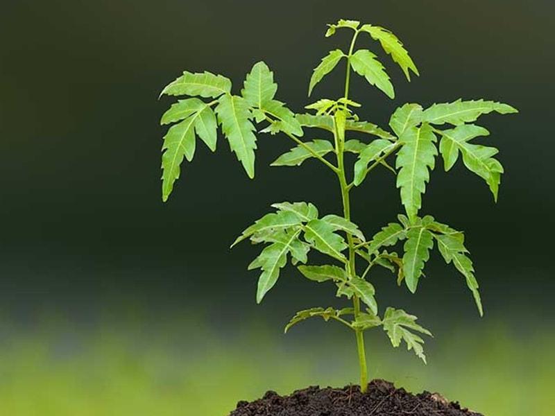 Shilajit bionut products
