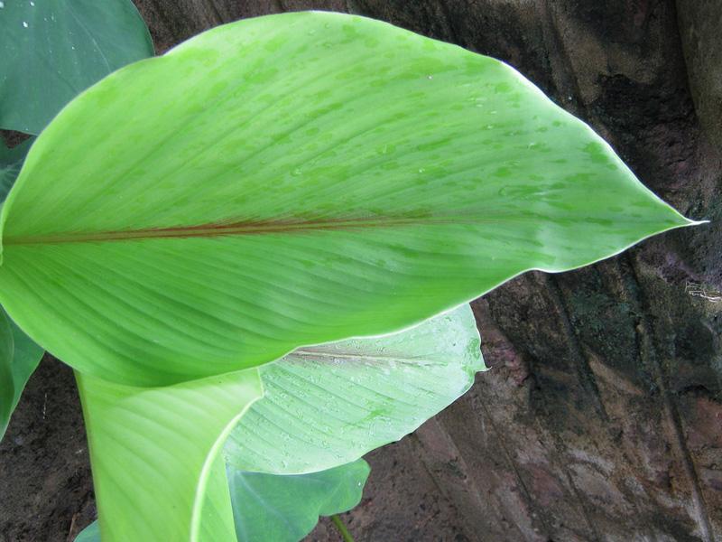Zinger Officinalis-bionut